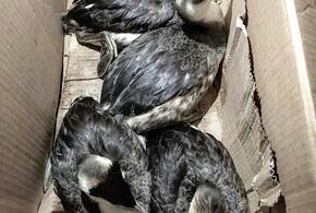 Орнитолог из Анапы объяснила причины массовой гибели птиц зимой