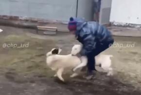 В Краснодаре мужчина едва не затравил дворнягу бойцовском псом (ВИДЕО)