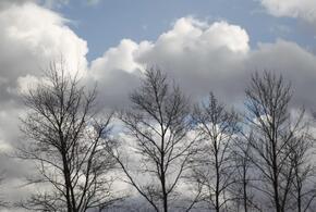 В Краснодарском крае 8 марта погода не порадует