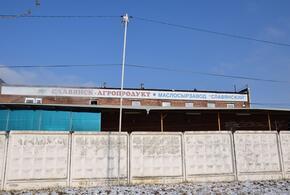 В Краснодарском крае маслосырозавод выпускал фальсифицированное молоко