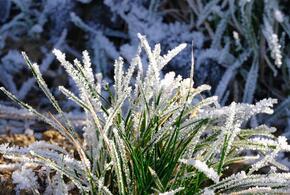 В Краснодарском крае ожидаются морозы