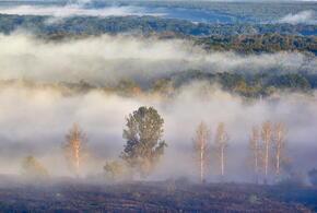 В Краснодарском крае ожидаются туман и гололед
