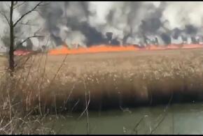 В Краснодарском крае снова горел камыш (ВИДЕО)