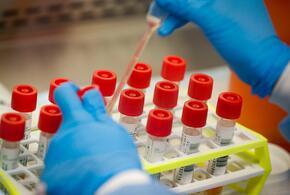 В России найден новый штамм коронавируса
