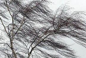 Жителей Краснодарского края предупредили о шторме