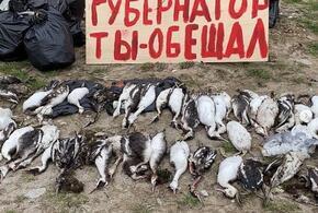 Жители Новороссийска убирали с пляжа мертвых птиц и мусор