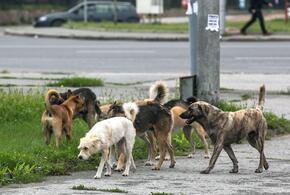 Краснодарский край вошел в тройку антилидеров по числу бродячих собак