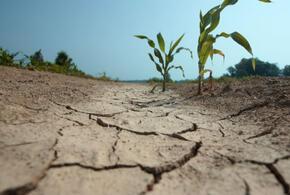 Кубани предрекли затяжную засуху