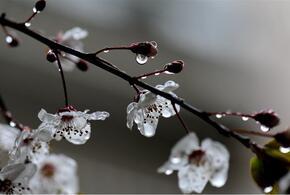 В Краснодарском крае сегодня будет по-прежнему дождливо и ветрено